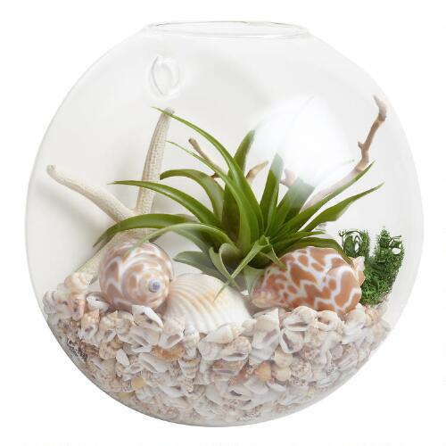 Wall Mounted Live Plant Glass Terrarium World Market