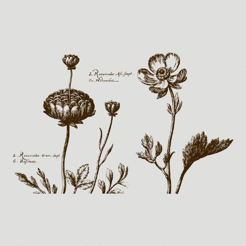 Woodcut Flowers Vinyl Wall Decal