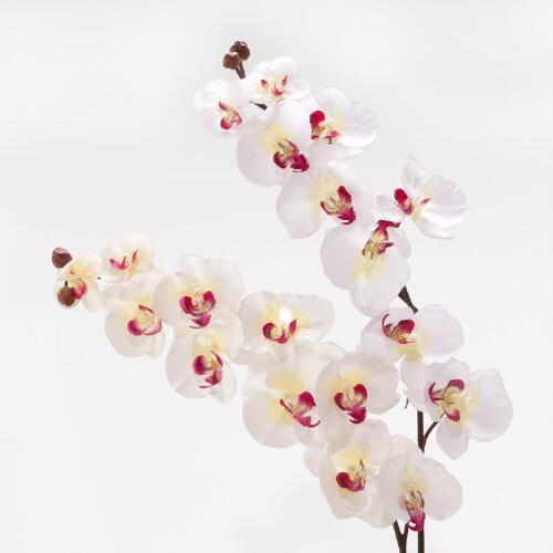 White and Cream Orchids, Set of 2