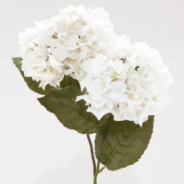White Hydrangeas, Set of 2