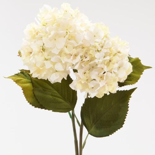 Cream Hydrangeas, Set of 2