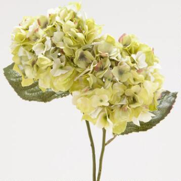 Green Hydrangeas, Set of 2