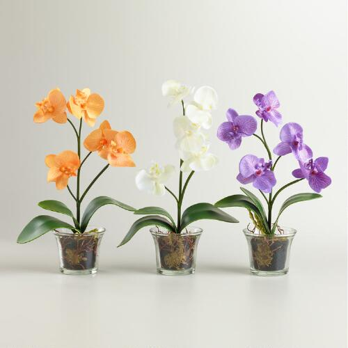 Mini Glass Pot Orchids, Set of 3