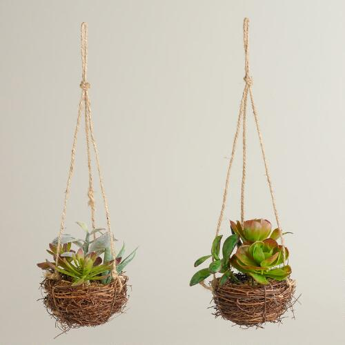 Hanging Succulent Plants, Set of 2