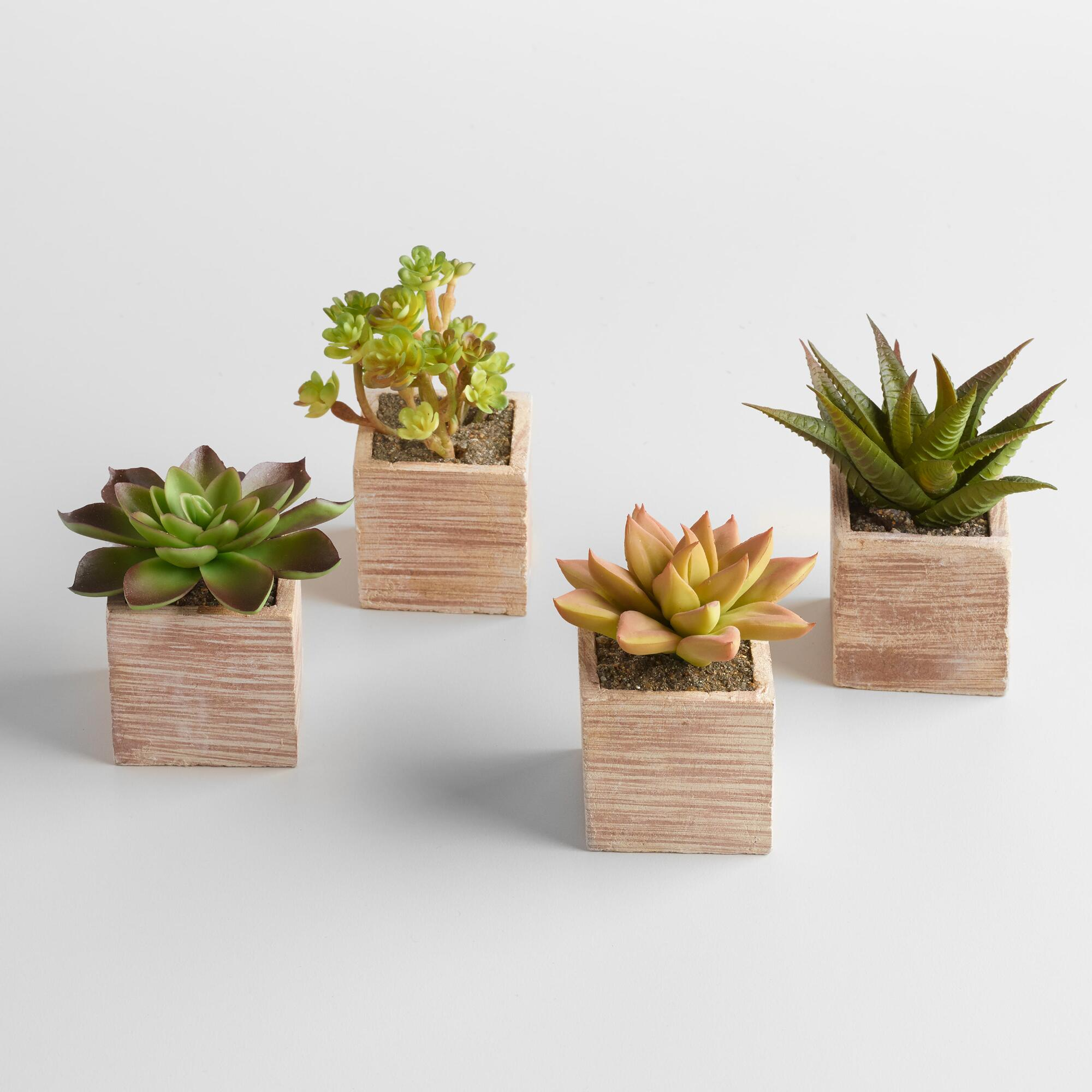 mini succulent pots set of 4 world market. Black Bedroom Furniture Sets. Home Design Ideas