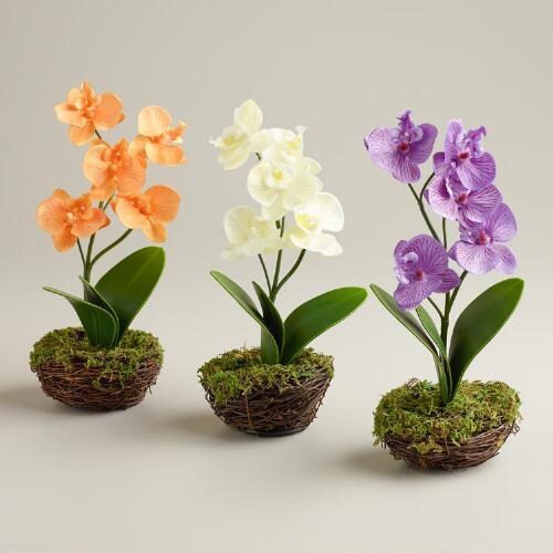Orchid in Mossy Containers, Set of 3