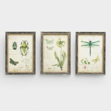 Curiosities Wall Art, Set of 3