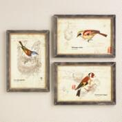 Nature Birds Wall Art, Set of 3