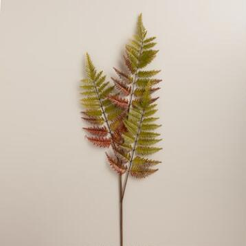 Fern Stems