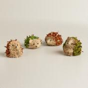 Mini Natural Fiber Hedgehogs, Set of 4