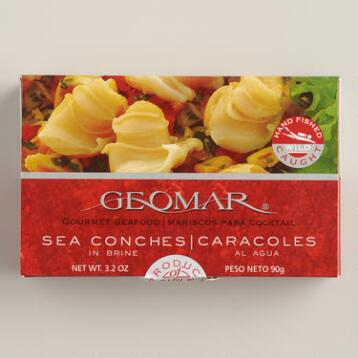 Geomar Sea Conch, Set of 4