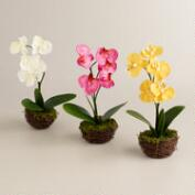 Orchid in Mossy Containers - Set of 3