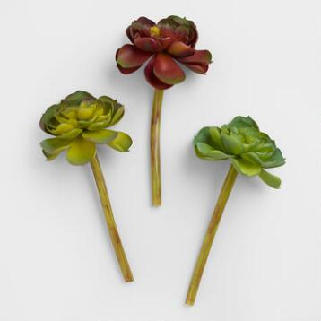 Echeveria Stems, Set of 3