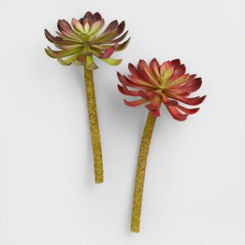 Aeonium Stems, Set of 2