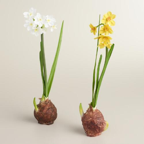 Narcissus Bulbs, Set of 2
