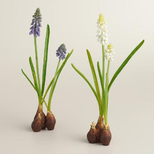 Hyacinth Bulbs, Set of 2