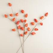 Orange Paper Lantern  Stems