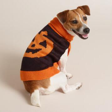 Small Pumpkin Knit Dog Sweater