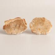Petrified Wood Knobs, Set of 2
