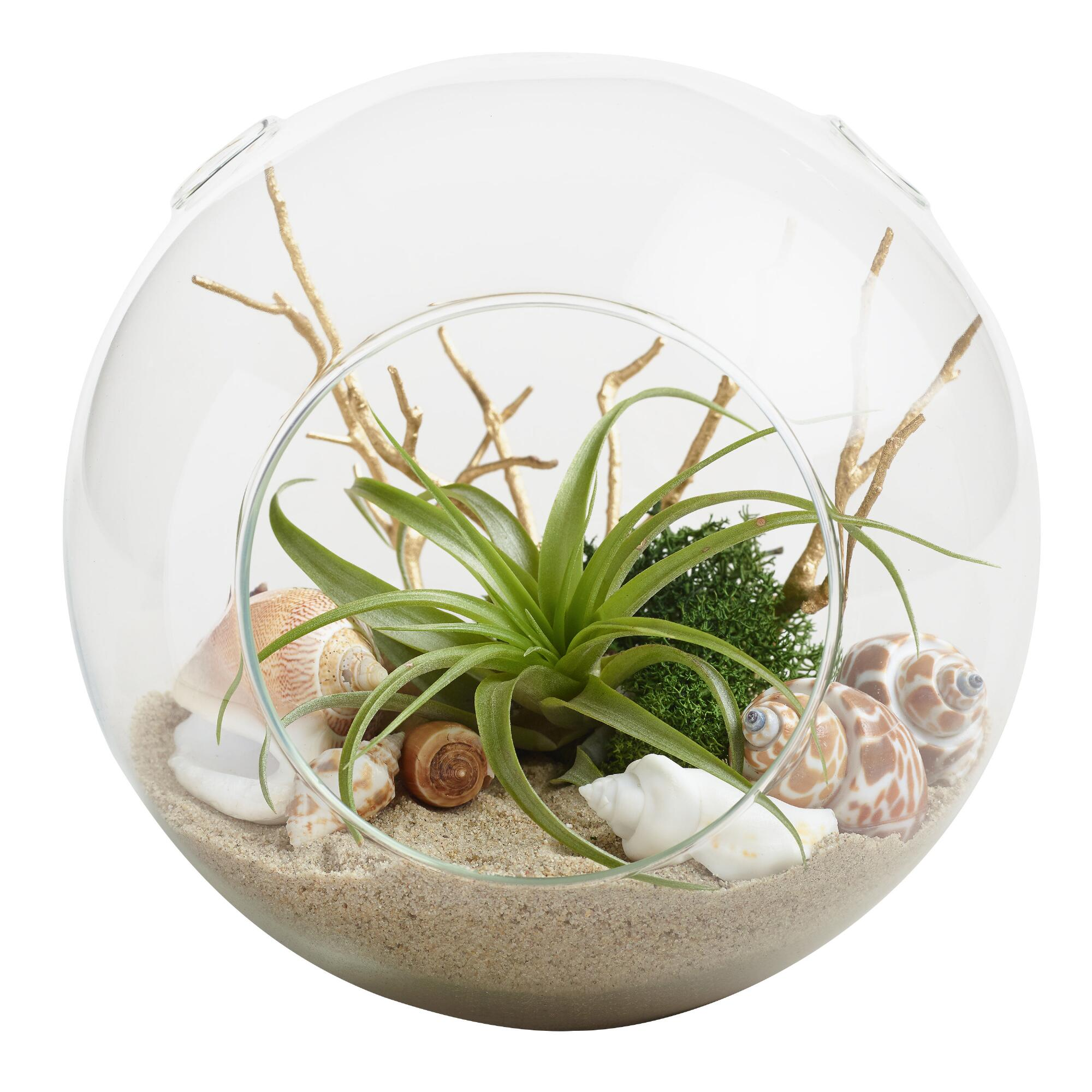 beach garden live plant glass terrarium world market