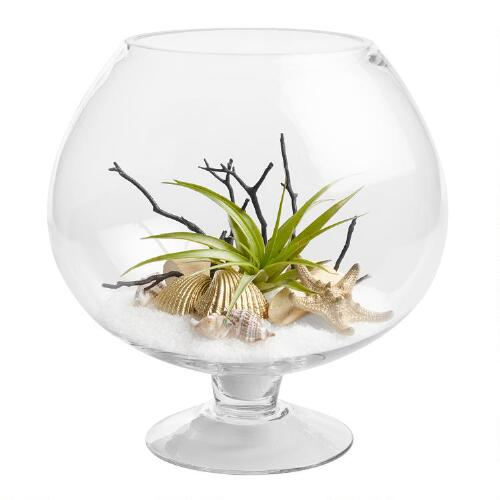 Live Plant Glass Terrarium with Driftwood