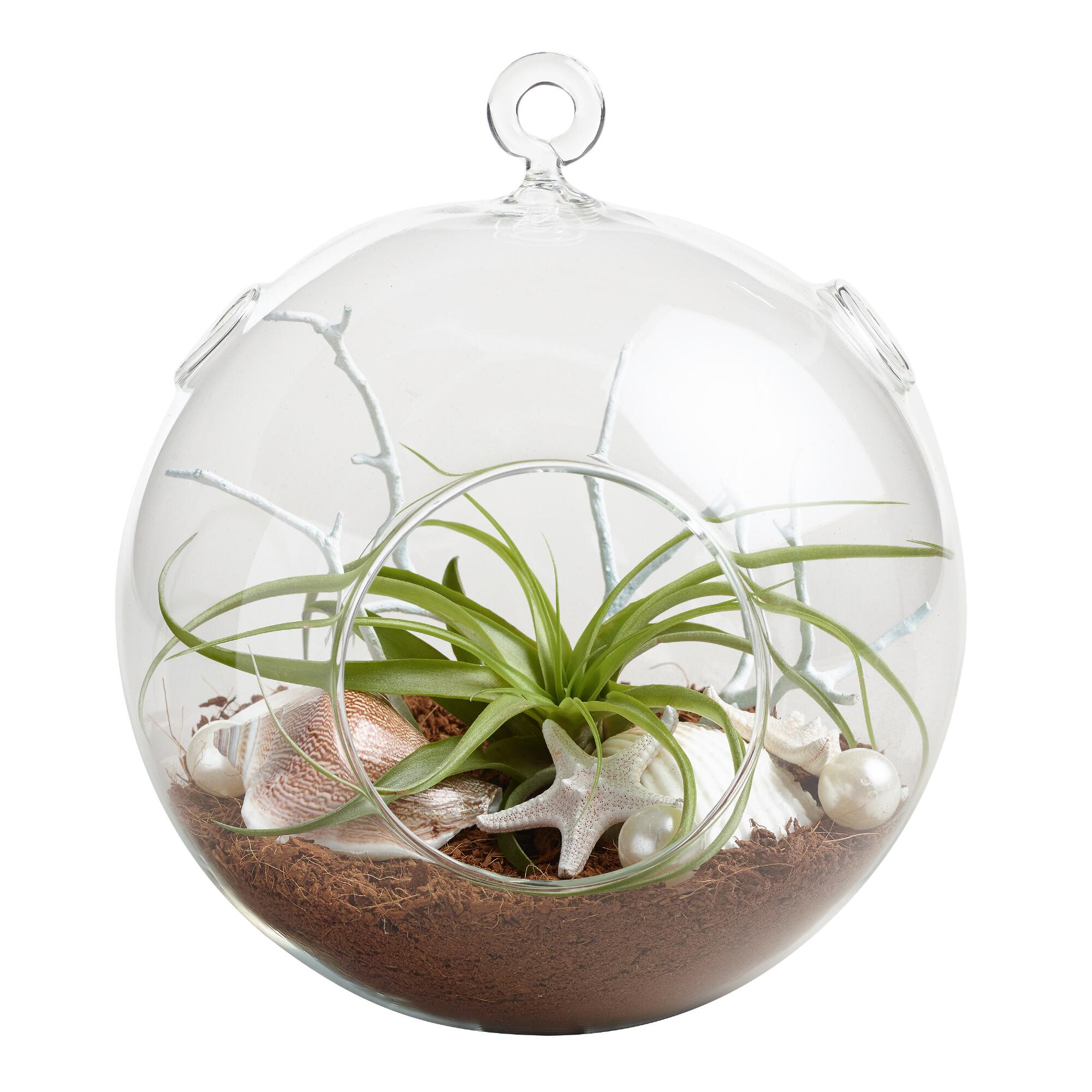 hanging live plant glass terrarium with starfish world