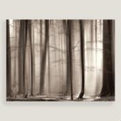 The Cloaking Woods