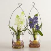 Hanging Mini Hyacinth Jars Set of 2