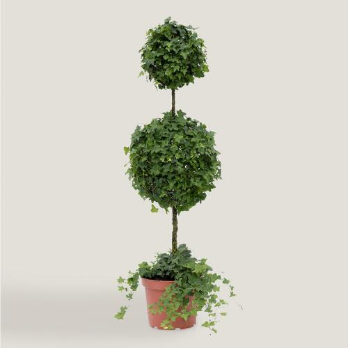 Live Ivy Double Ball on Stem Topiary