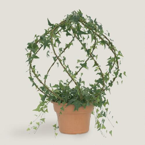 Live Ivy Rustic Spiral Globe Topiary