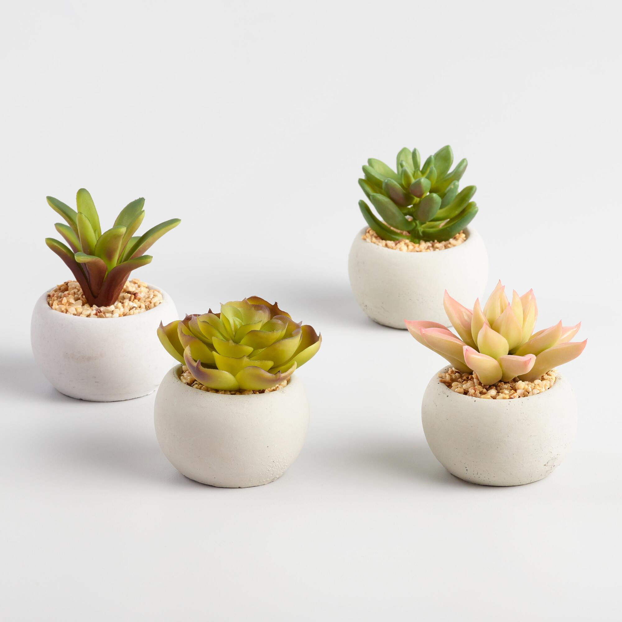 mini succulent cement pots set of 4 world market. Black Bedroom Furniture Sets. Home Design Ideas
