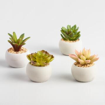 Mini Succulent Cement Pots Set of 4