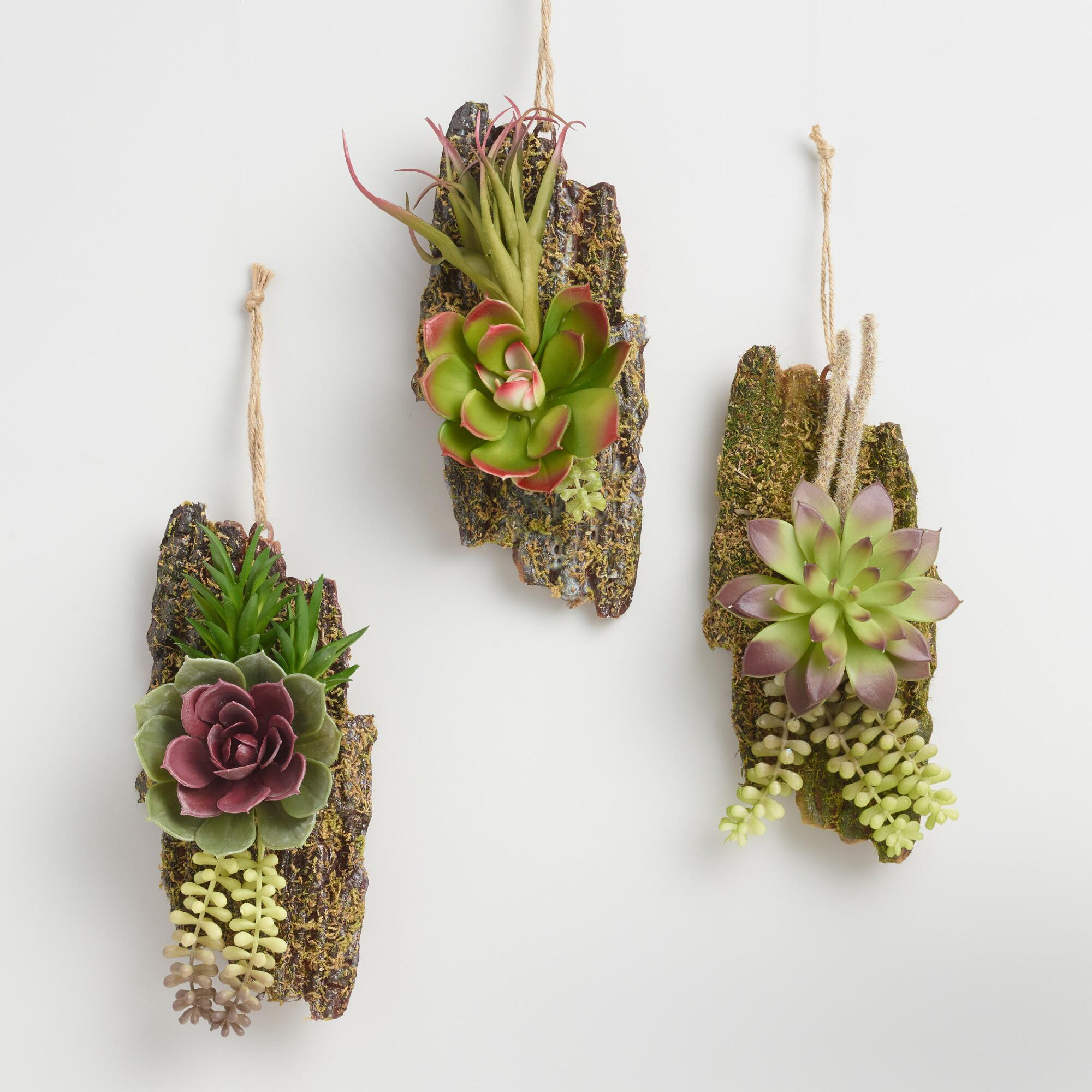 Hanging Succulent And Bark Decor Set Of 3