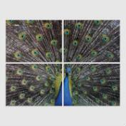 Peacock Series 4 Piece Wall Art by Dean Nahum