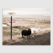 Black Sheep by Topich