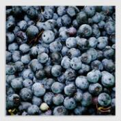Blueberries by Syd Wachs