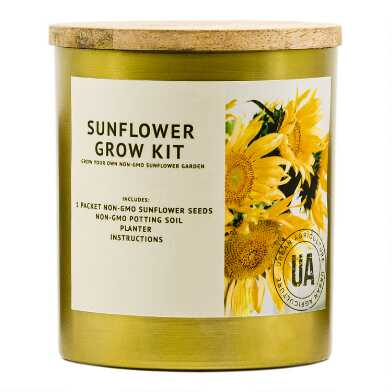 Urban Agriculture Brass Container Sunflower Grow Bag Kit