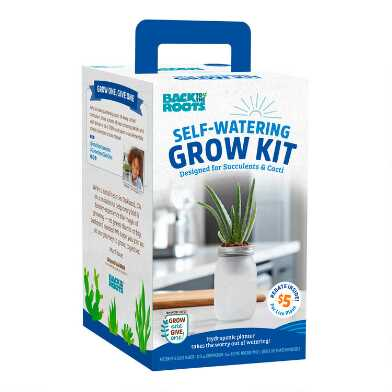Back to the Roots Mini Succulent Self Watering Grow Kit