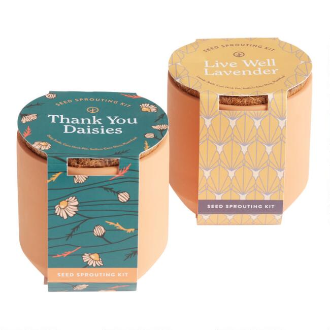 Modern Sprout Tiny Terracotta Grow Kits Set of 2