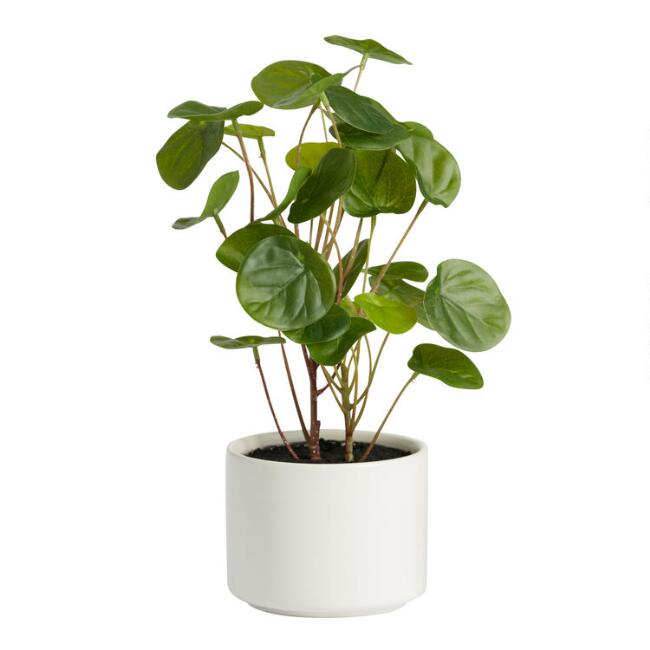 Faux Chinese Money Plant in Ceramic Pot
