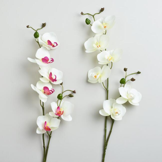 White and Cream Phalaenopsis Orchid Stems, Set of 2