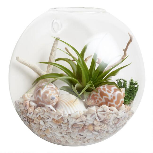 Wall-Mounted Live Plant Glass Terrarium