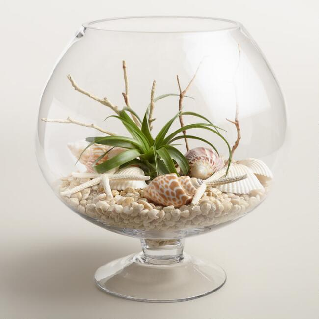 Live Plant Glass Terrarium with Seashells