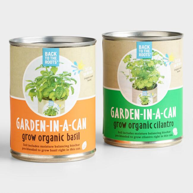 Cilantro and Basil Organic Garden in a Can 2 Pack