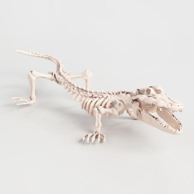 Alligator Skeleton