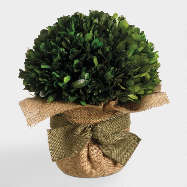 Preserved Boxwood Ball in Burlap
