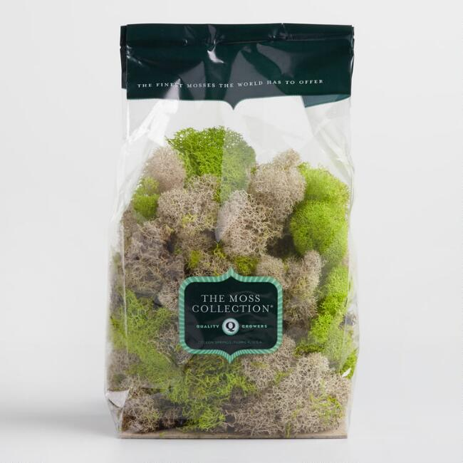 Natural and Green Reindeer Moss