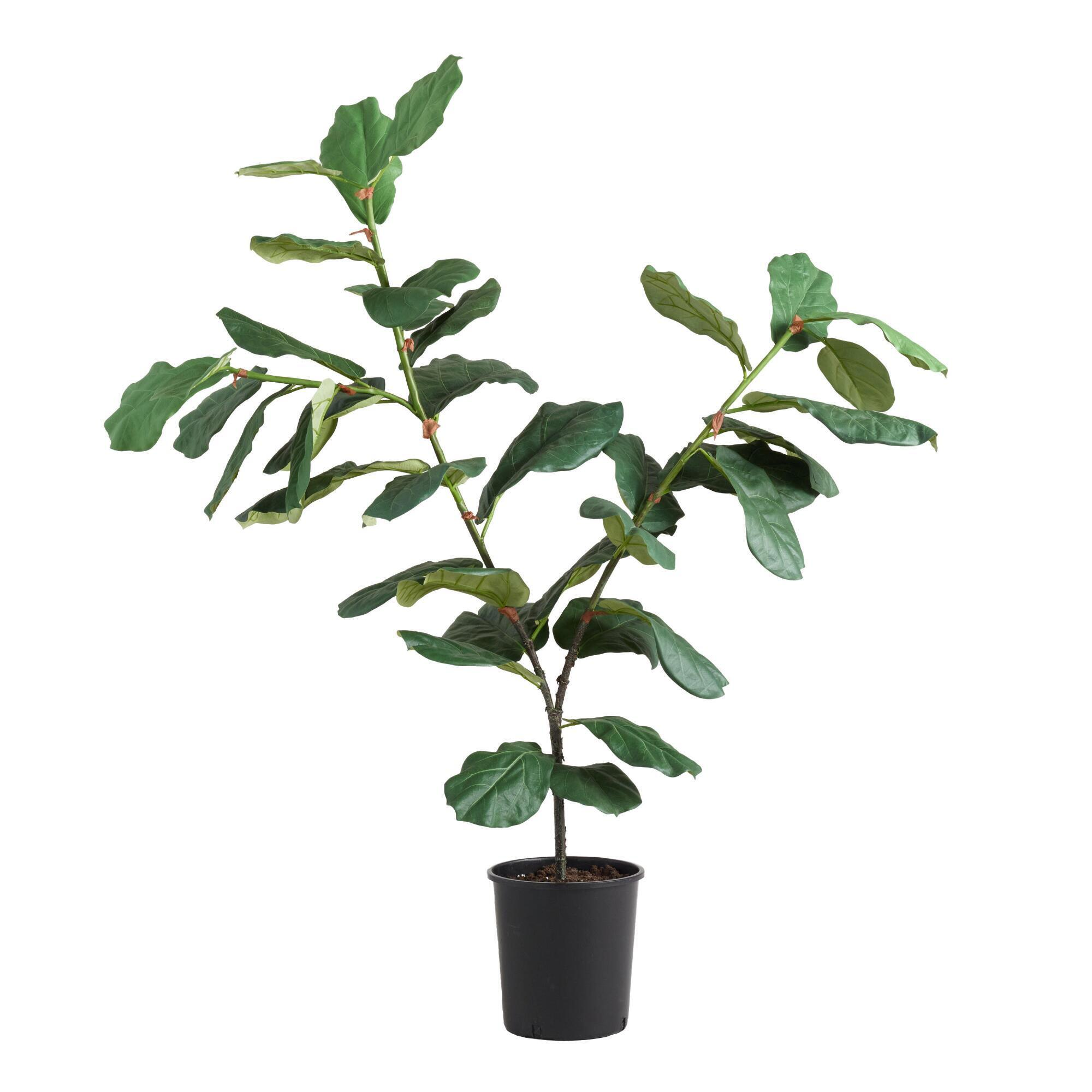 5 ft faux fiddle leaf fig plant - Fiddle Leaf Fig Tree
