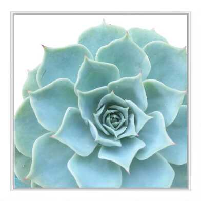 Ornamental Succulent Framed Canvas Wall Art