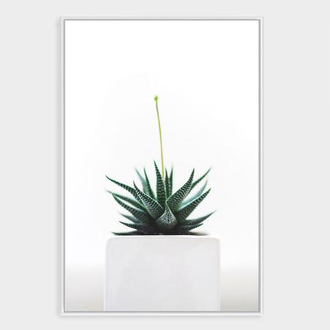 Potted Succulent Wall Art in White Frame | World Market